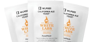 Homebrewing yeast